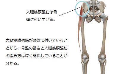 大腿筋膜張筋が骨盤についている様子から、骨盤の角度と大腿筋膜張筋の緩み方が関係していることを説明しているイラスト