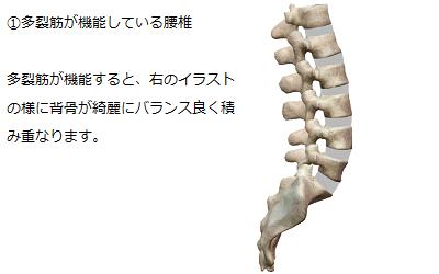 多裂筋が機能し、綺麗にバランス良く脊柱が積み重なっている様子を説明しているイラスト