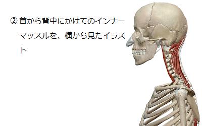 首から背中にかけてのインナーマッスルを横から見たイラスト