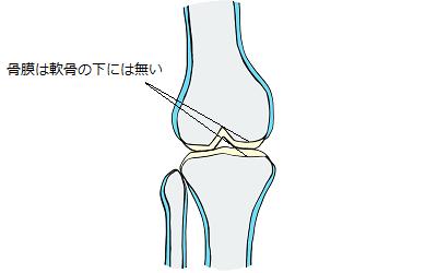 関節部に骨膜が無いことを表しているイラスト