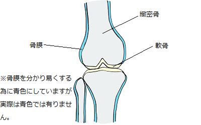 骨の構造を説明するためのイラスト
