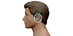 耳のポイントを示したイラスト
