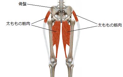 緩んだり伸びたりしている太ももの筋肉