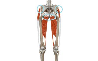 骨盤に筋肉がついている様子を表しているイラスト