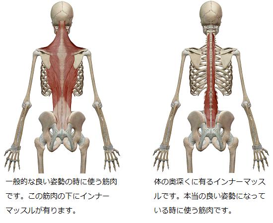 「一般的な良い姿勢」の時に使う背中の筋肉と、「本当の良い姿勢」の時に使うインナーマッスルを比較したイラスト